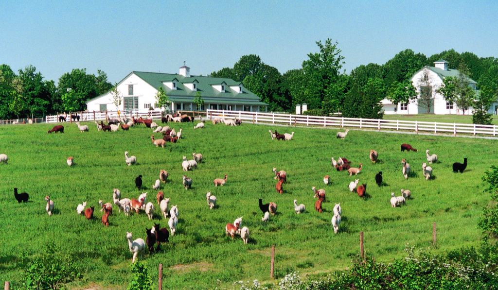 One of the East Coast's larget alpaca farms since 1993