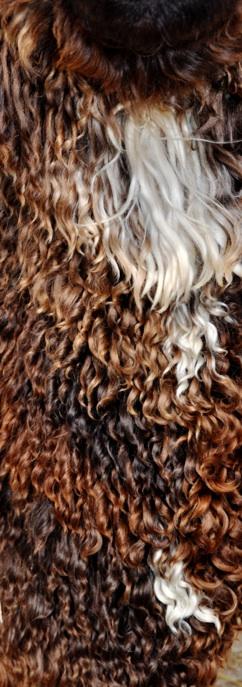 Suri alpaca fiber